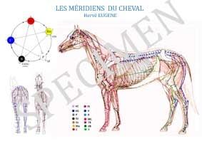 """PROMO DU MOIS DE MAI 20211 poster 100x70 cm offert pour l'achat des """"Planches des méridiens du cheval""""👉 https://editions..."""