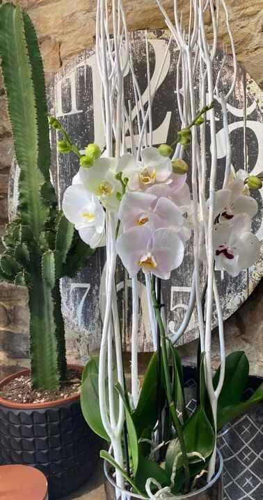 Bonjour à tous Camille fleurs est en congé jusqu'au 30/08 inclus,réouverture le 31/08.Merci à tous et à bientôt ☺️